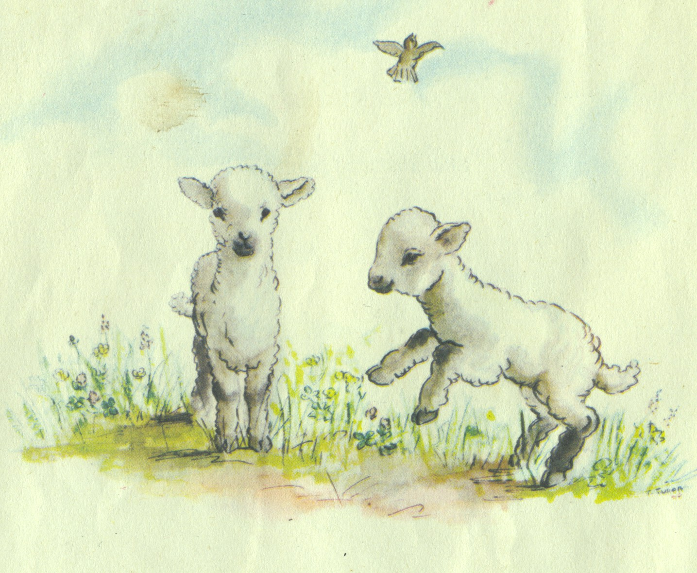 Lambs illustration by Tasha Tudor