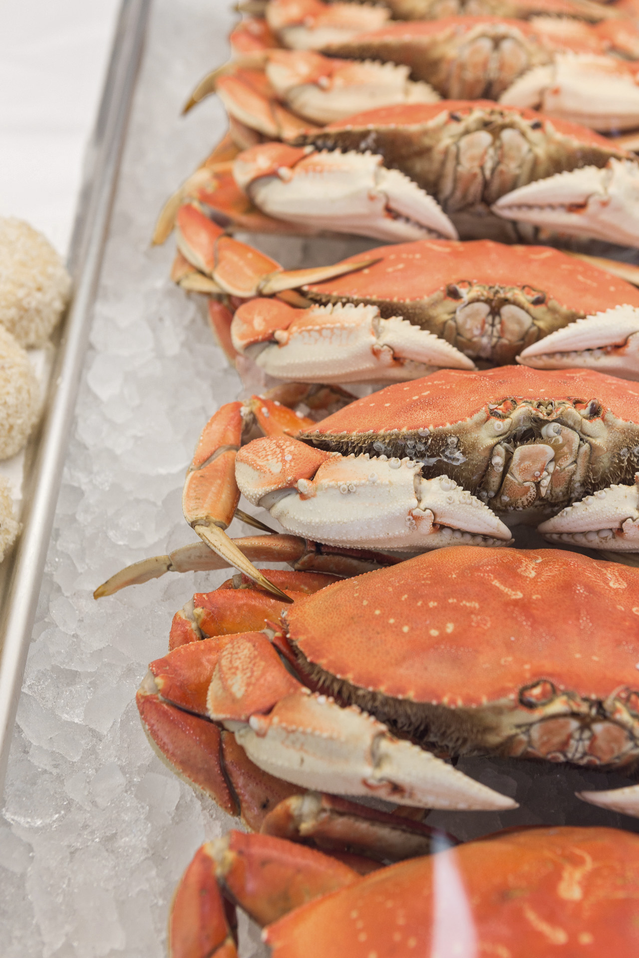 EA - crabs up close - lou daprile.jpg