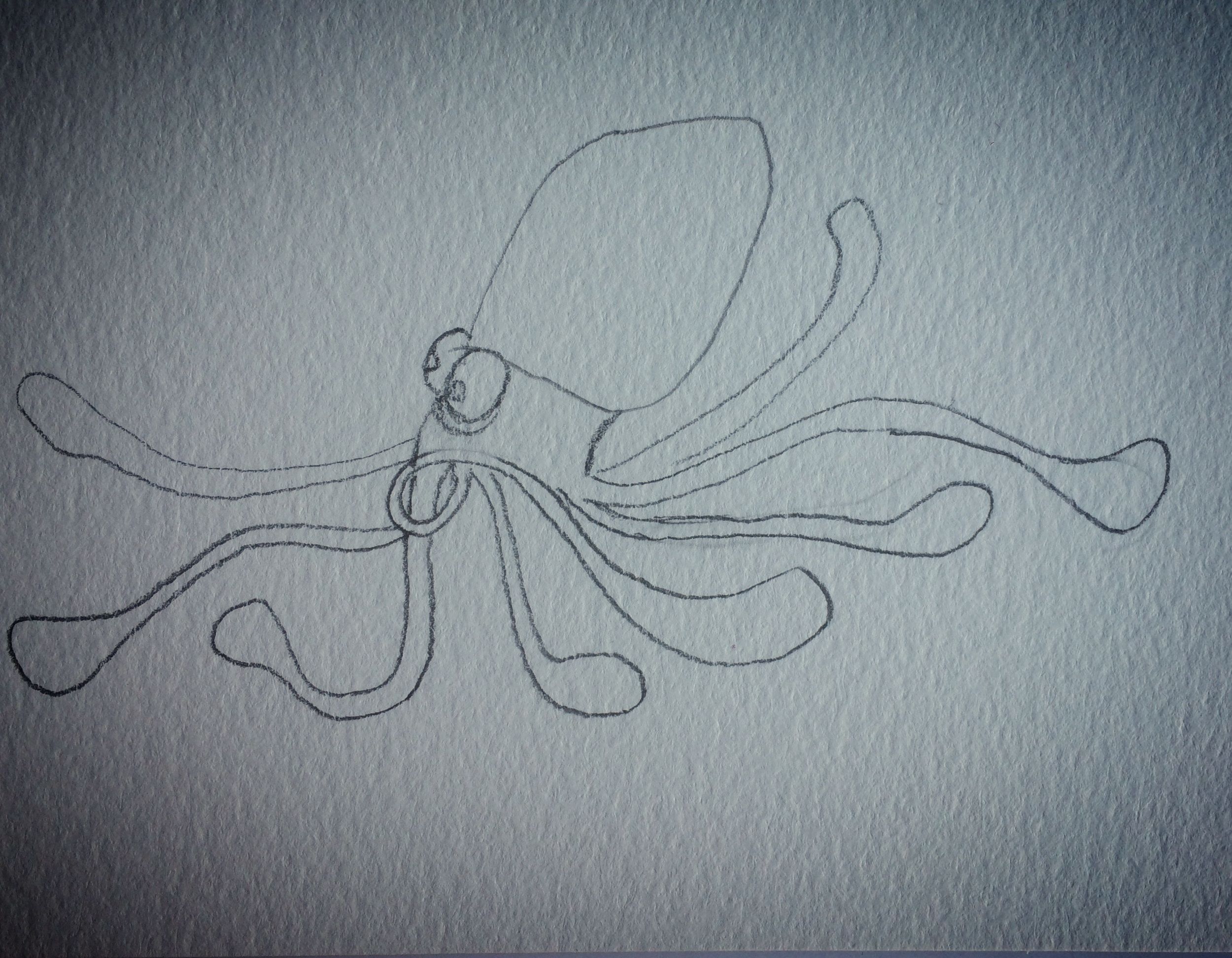 hurried squid