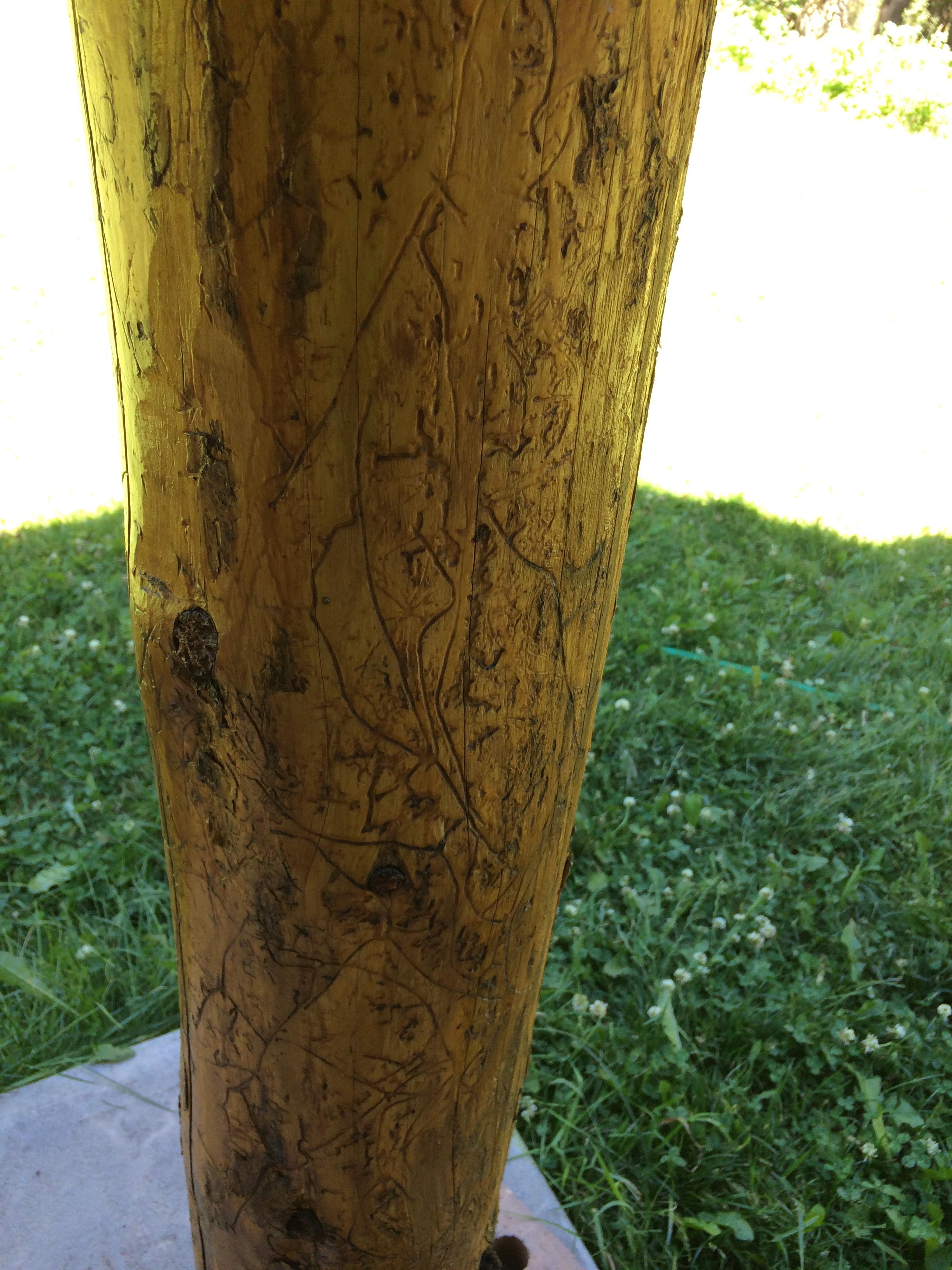 wood worm eaten wood