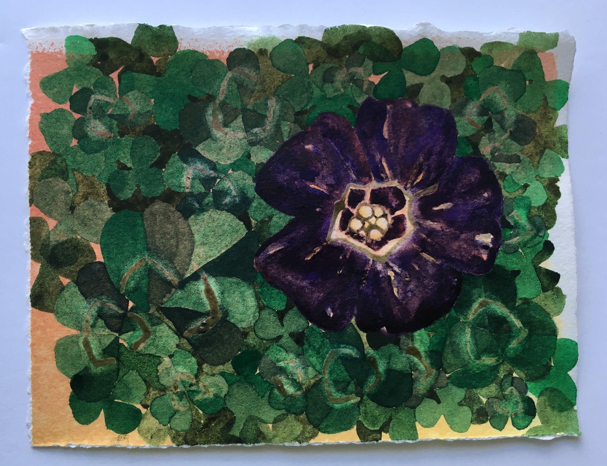 clover in abundance