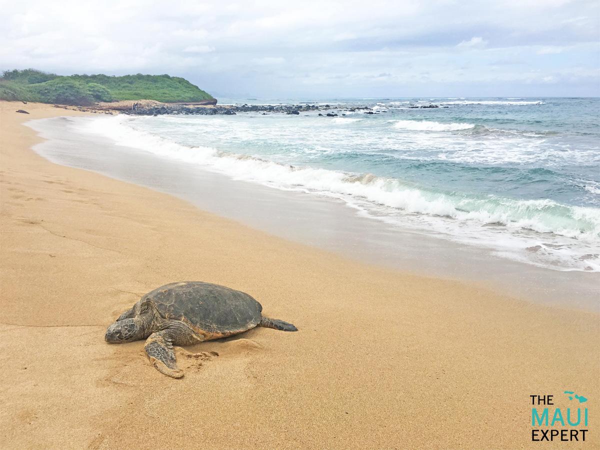 Tavares Beach Maui.jpg
