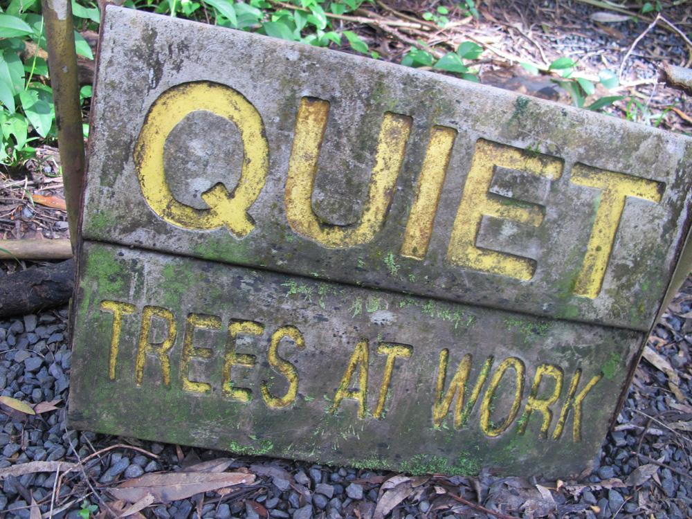 Treees Working.jpg