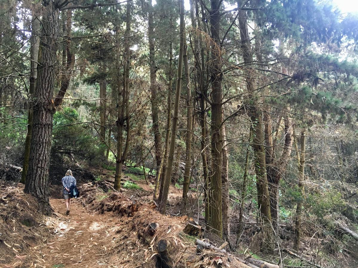 Waiakoa Loop Trail Nancy.jpg
