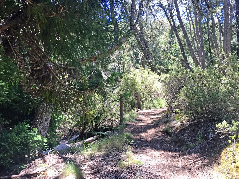 Hosmers Trail Thumb.jpg