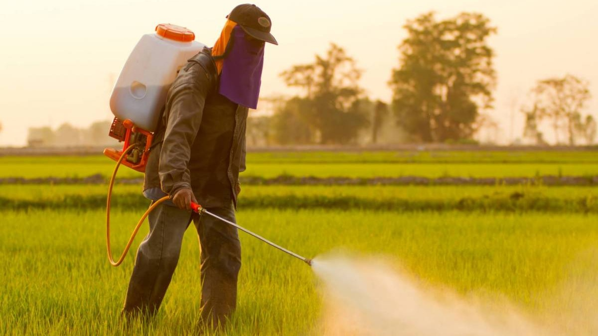 LANDMARK CASE AGAINST MONSANTO IS TIP OF THE ICEBERG  by Daniel Root