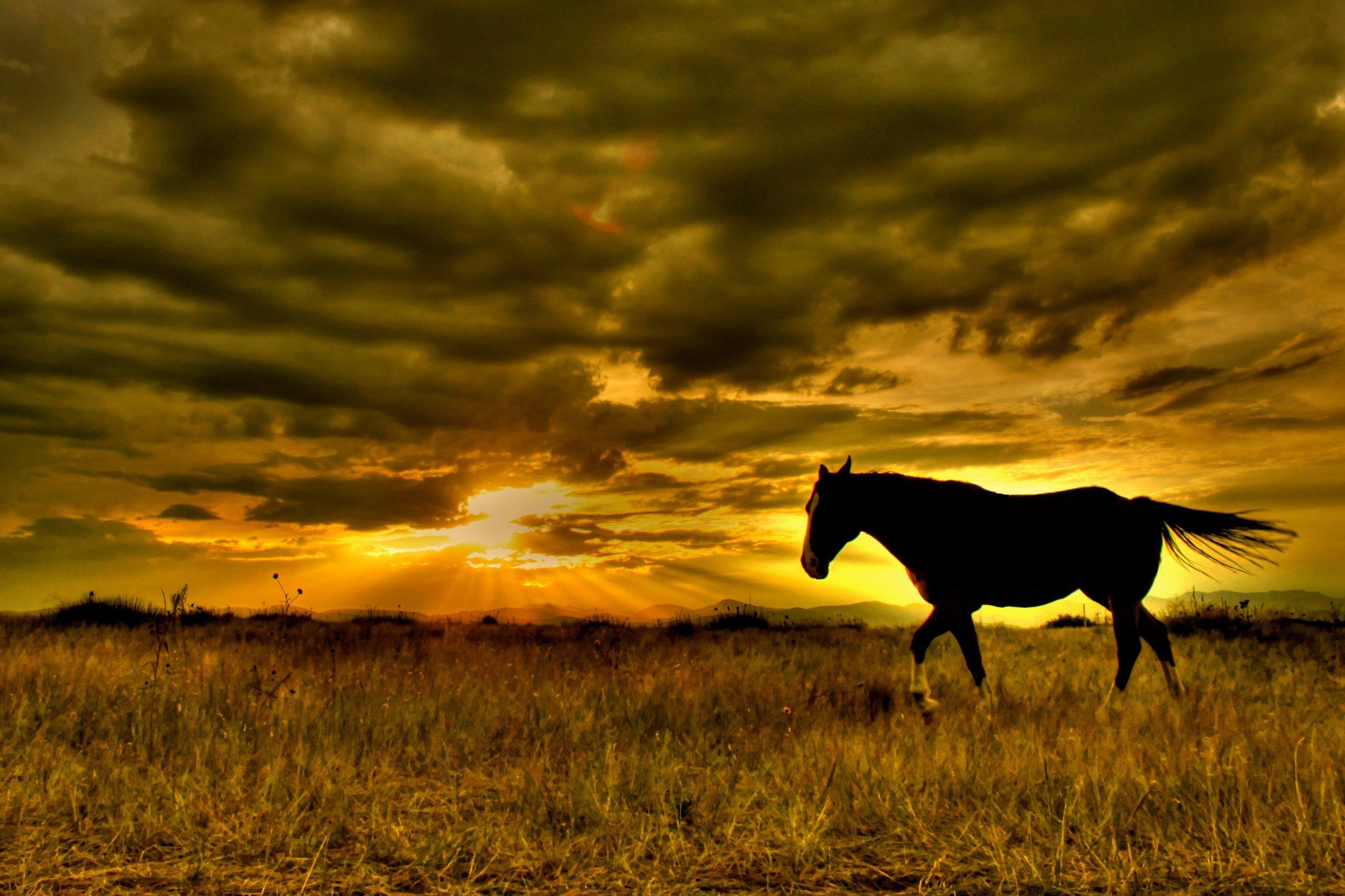 Horse-Heaven.jpg