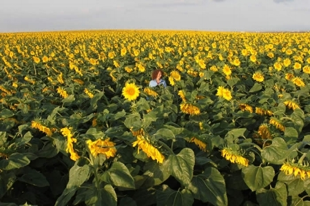 "I think, at some point in every person's life, they should stand in a field of sunflowers!  ""Pass Awarded Boulder County Business Award Health Care Hero"""