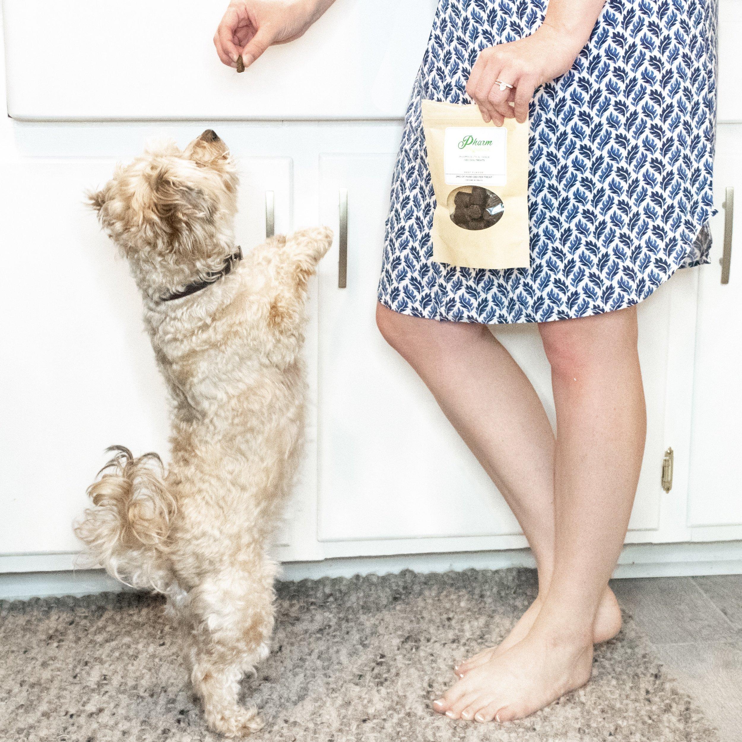 CBD Oil Dog Treats by PharmOrganics   A Demure Life Fashion Blog