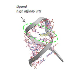 nmr+model_hairpin+plus+ligand.jpg