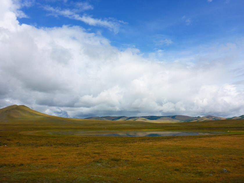 Lilly-Wild-Landscape.jpg