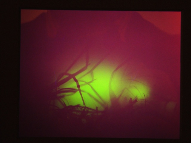 Walking firefly light, direct exposure on e6 sheet film, no lens, in a box with some grass.