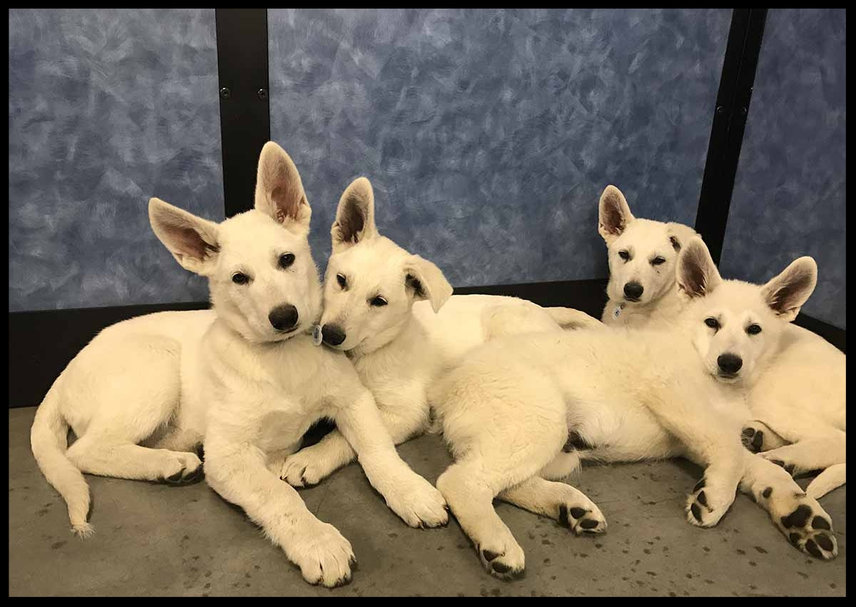 Puppy Class for Polarbears at Petsmart