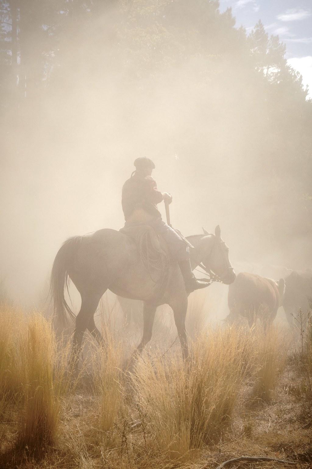 A gaucho herding cattle through desert dust.