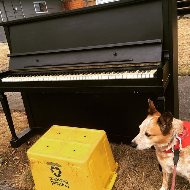Our musical herder tried to get us another piano. Georgia is always working to keep us busy! Look out for a new EP and the start of a new album! #portland #piano #cattledog #redheeler #rockandroll