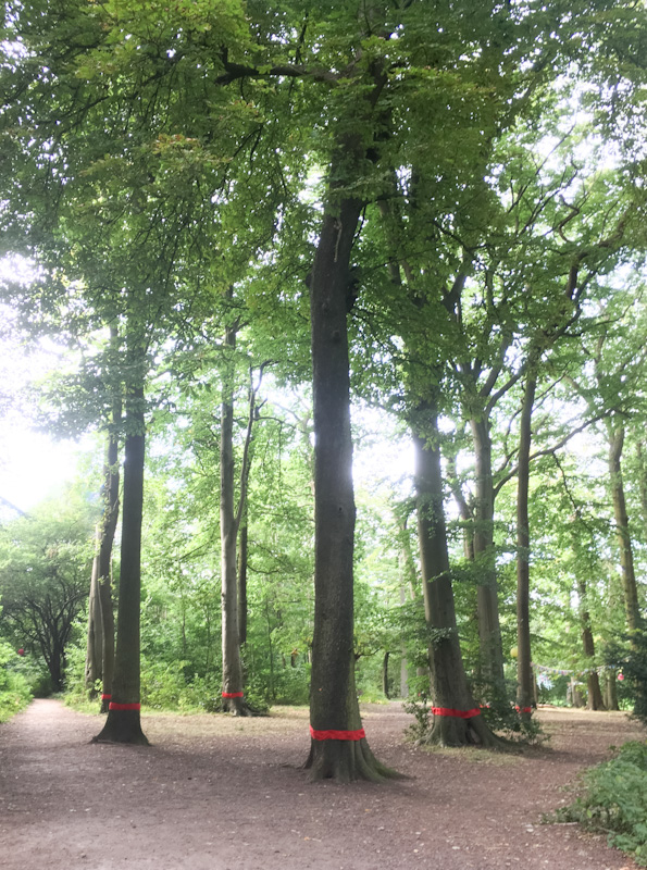 Red Line tree copse WB.jpg