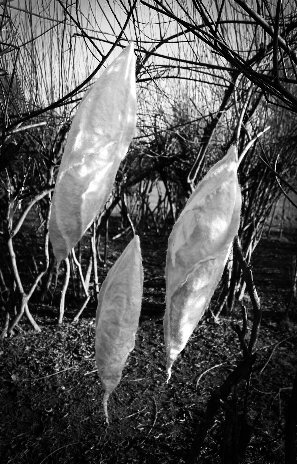 Chrysalis breeze monoWB.jpg