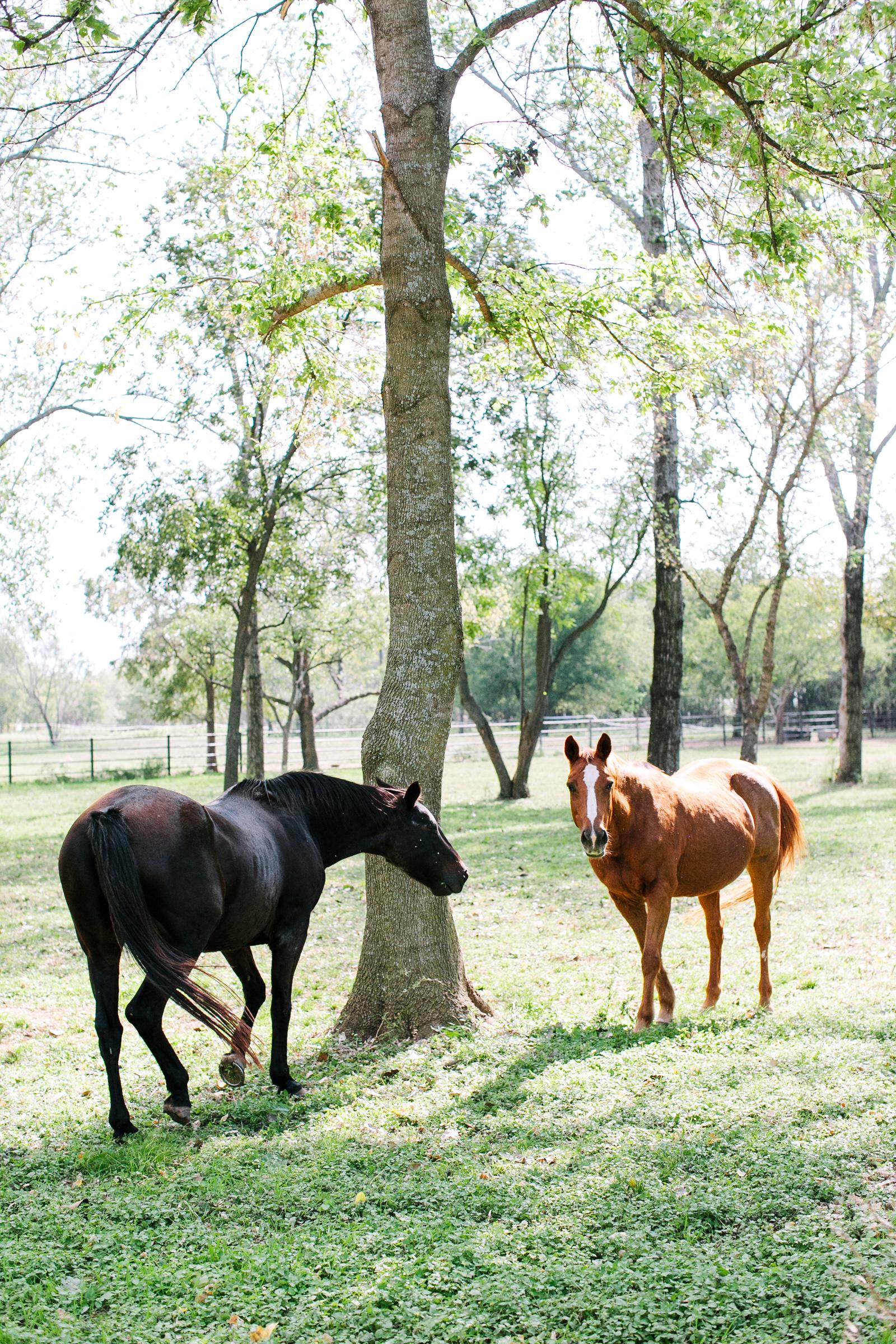0007_Waco_Ranch_Wedding_Catherine_Nick_Riewoldt.jpg