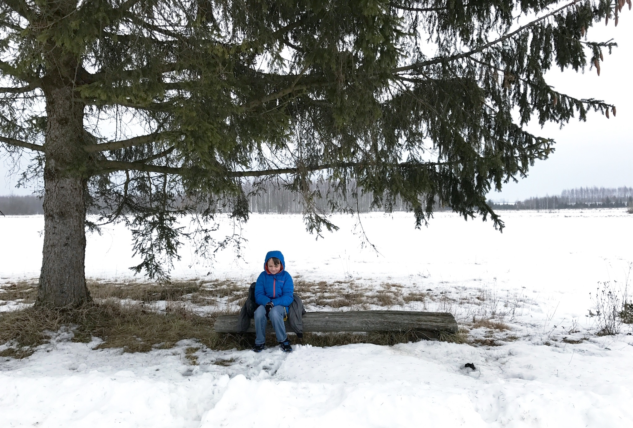 sitting-beneath-a-tree-bialowieza-forest.jpg
