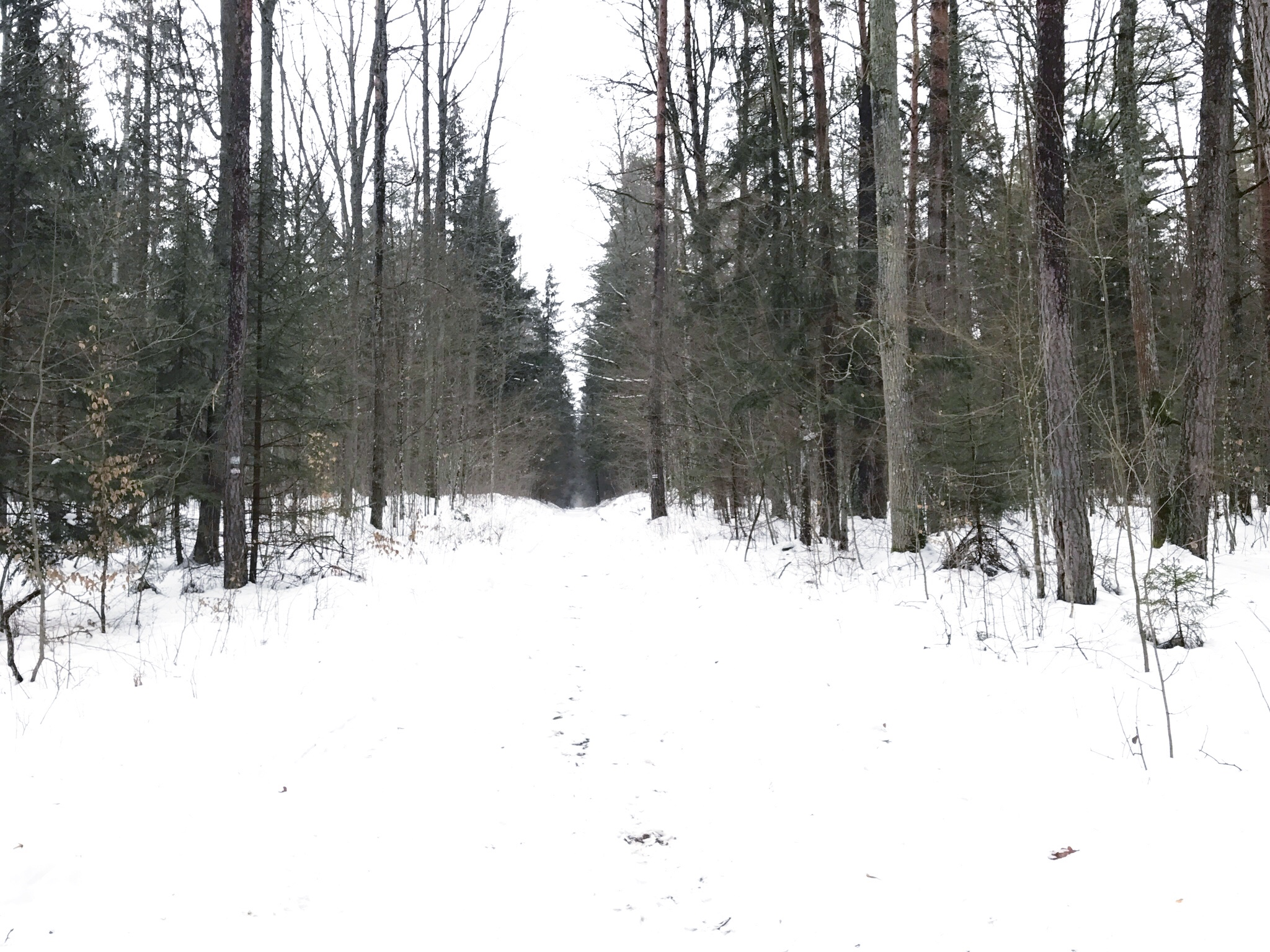 forest-path-bialowieza-forest.jpg