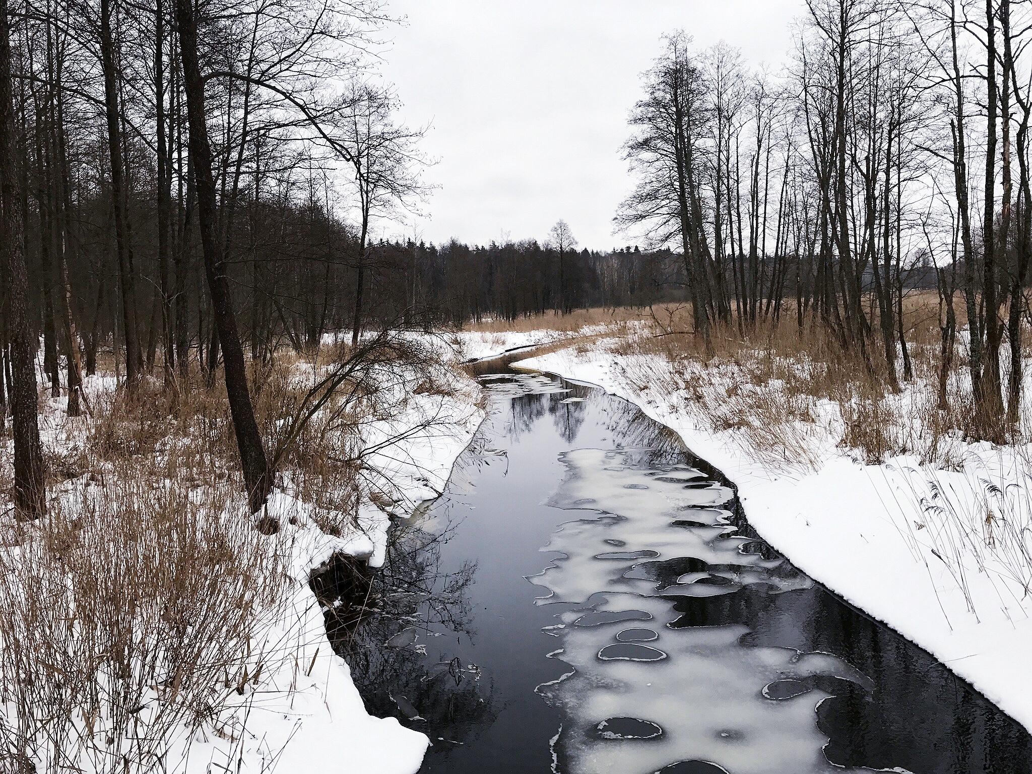 stream-bialowieza-forest.jpg