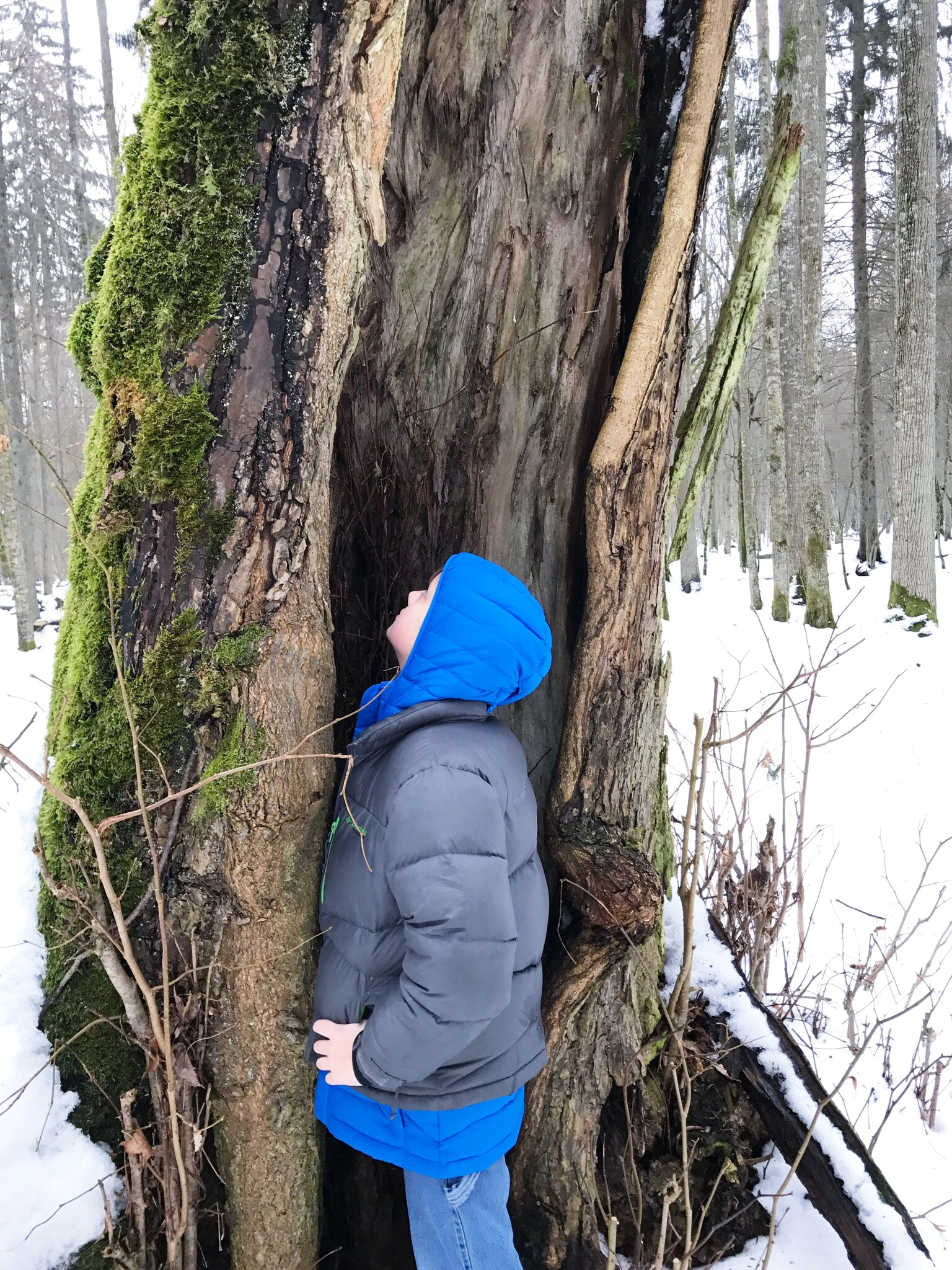 exploring-trees-bialowieza-forest.jpg