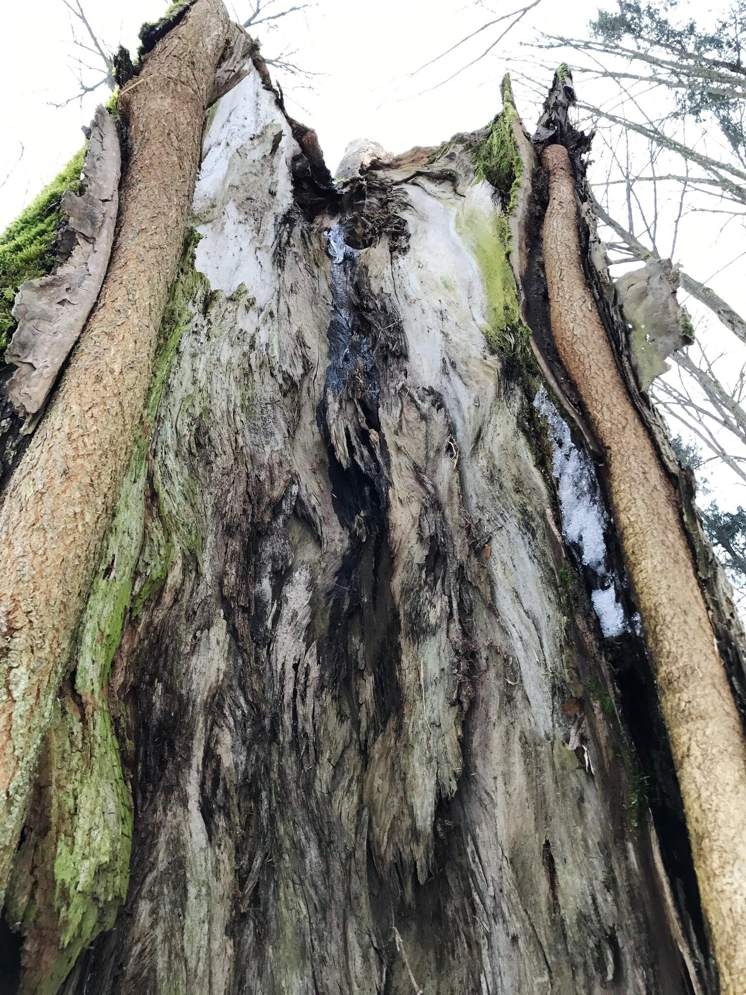 inside-hollow-tree-bialowieza-forest.jpg
