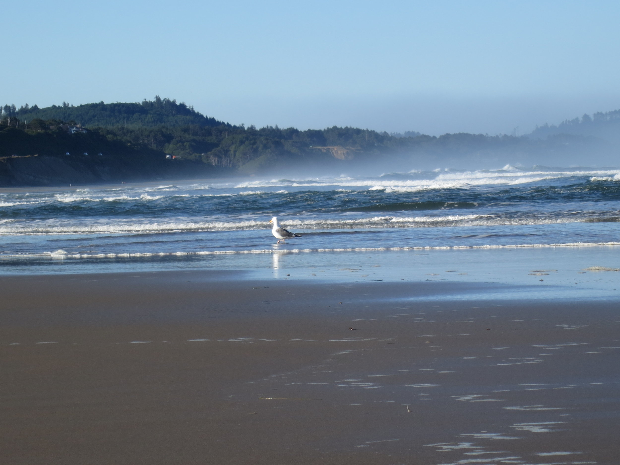 Fog and seagulls on the coast of Oregon make it worth getting up early