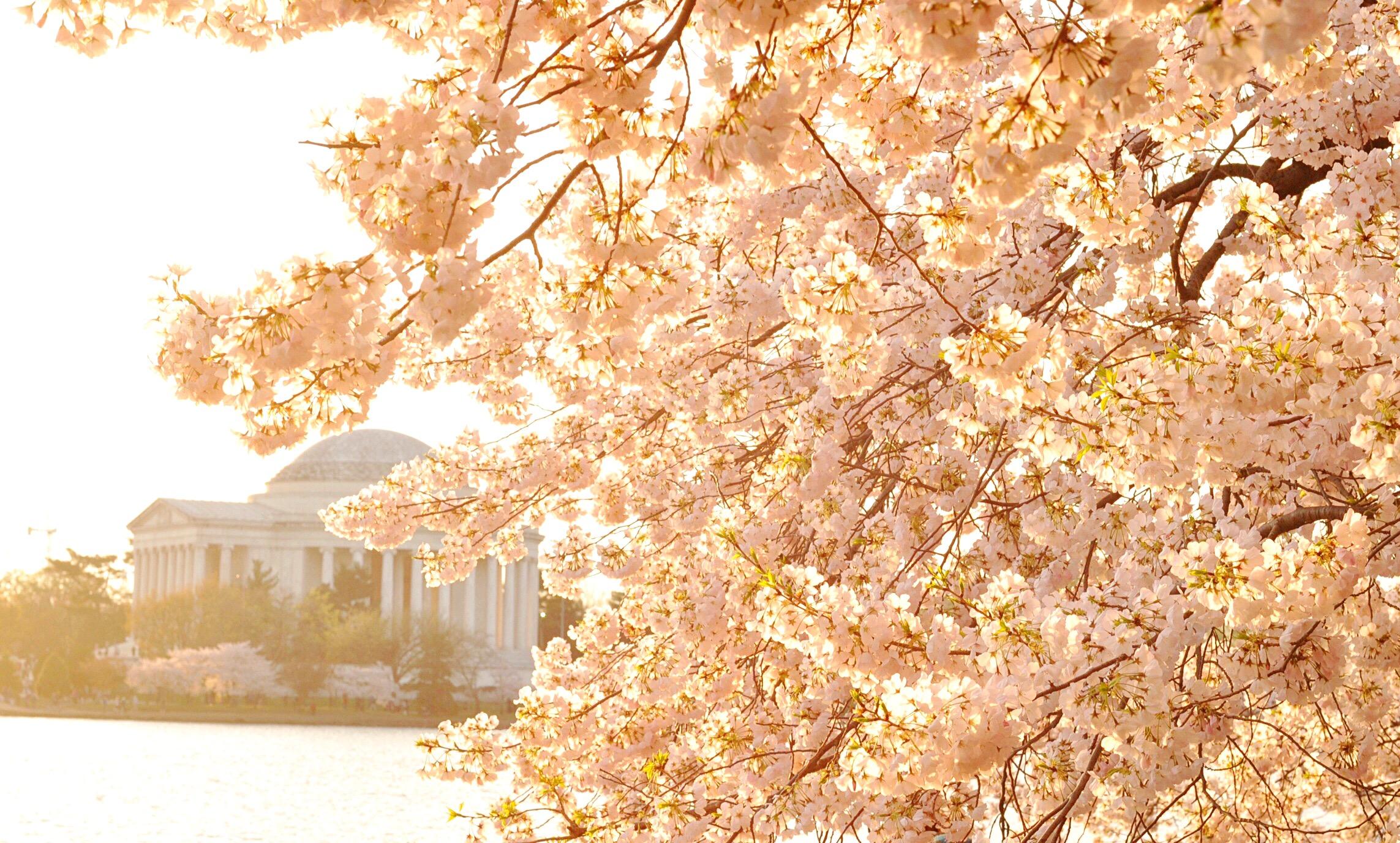 The sun dawning on the Jefferson Memorial in Washington, D.C.