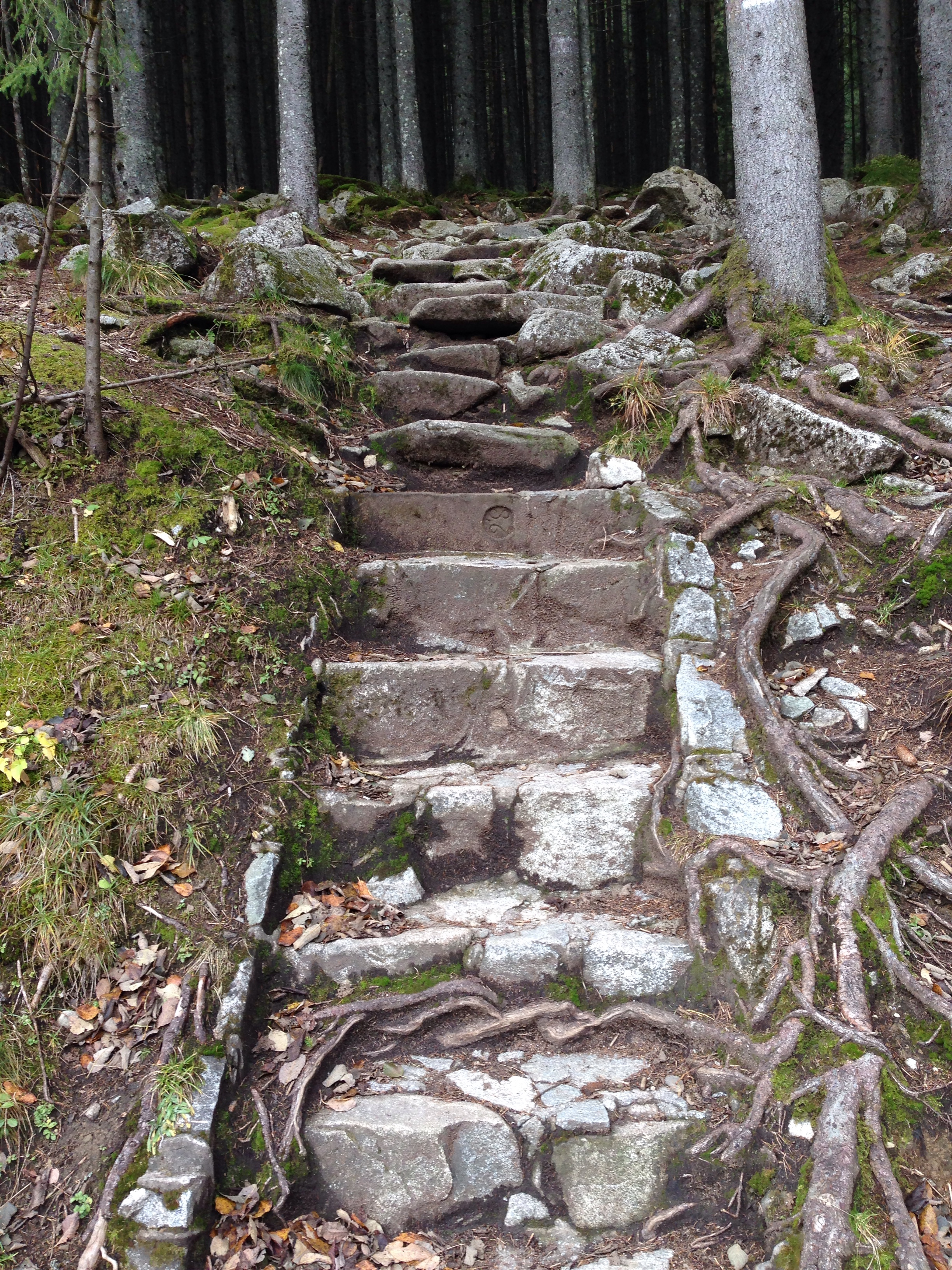 Paths that beckon to me in the Tatra Natonal Forest in Southern Poland.