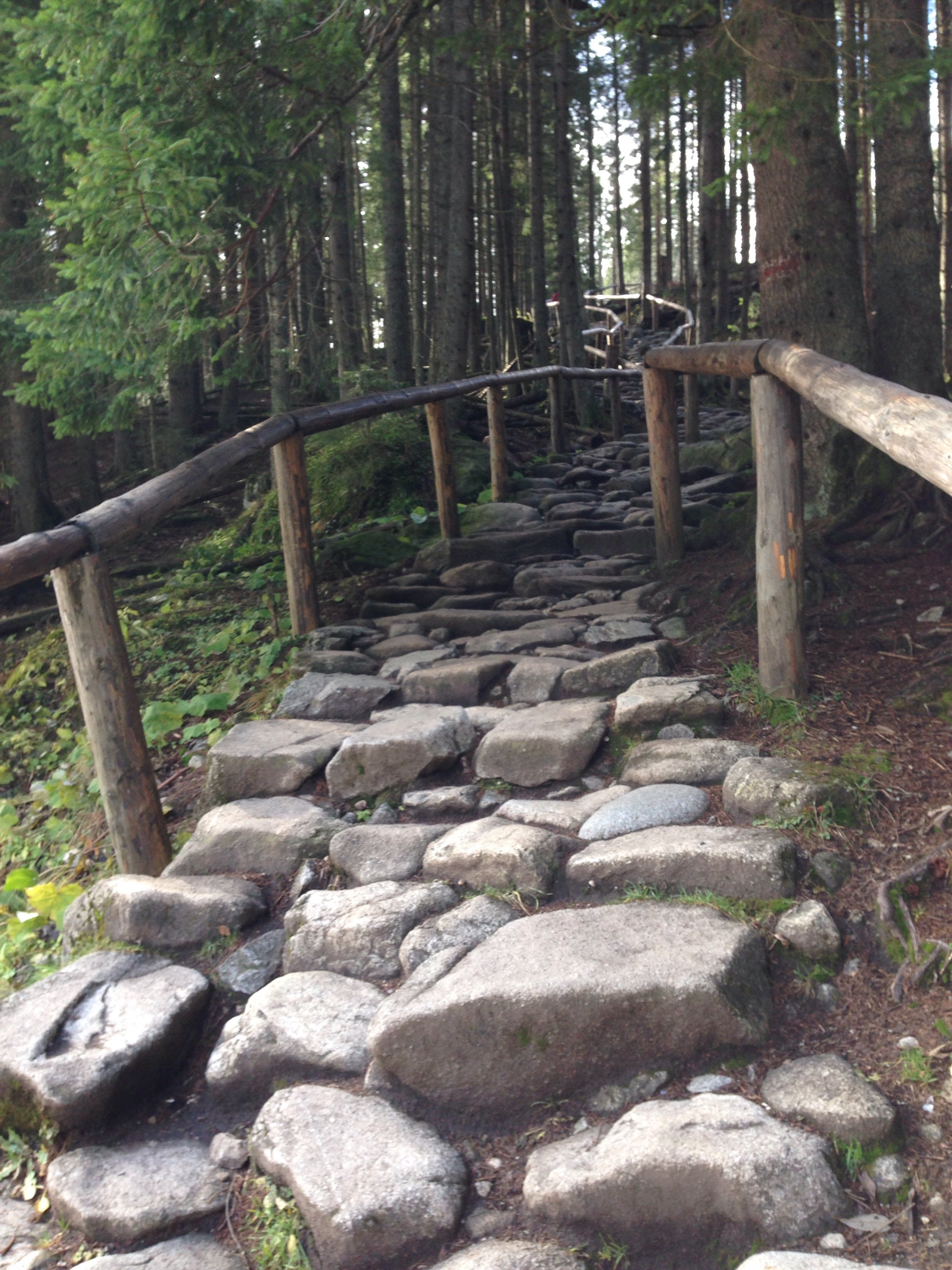 A path in the Tatra Mountains.