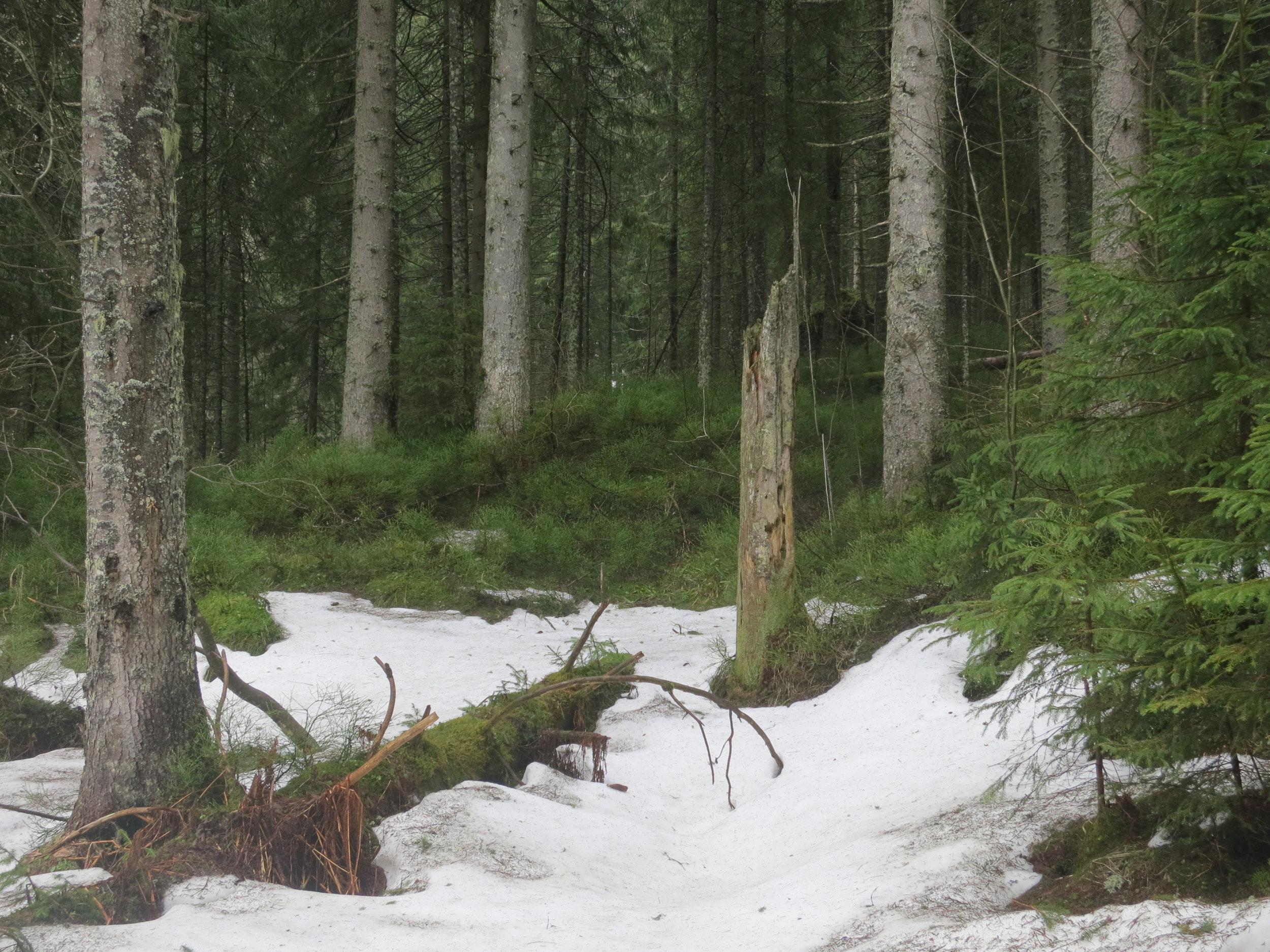 Snow in the woods on the way to Dolina Pięciu Stawów
