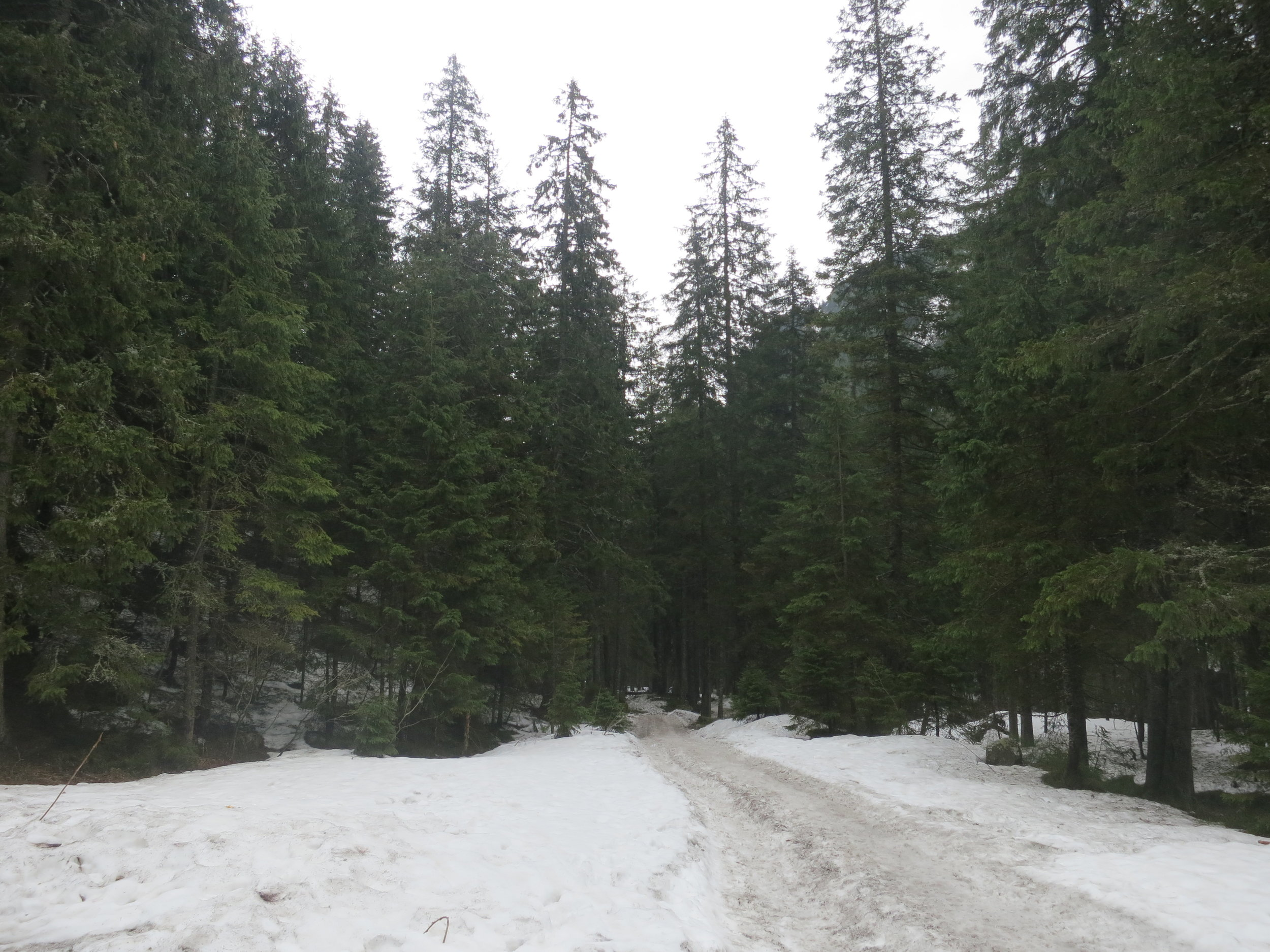 A snowy path through the trees in the Tatra Mountains National Park