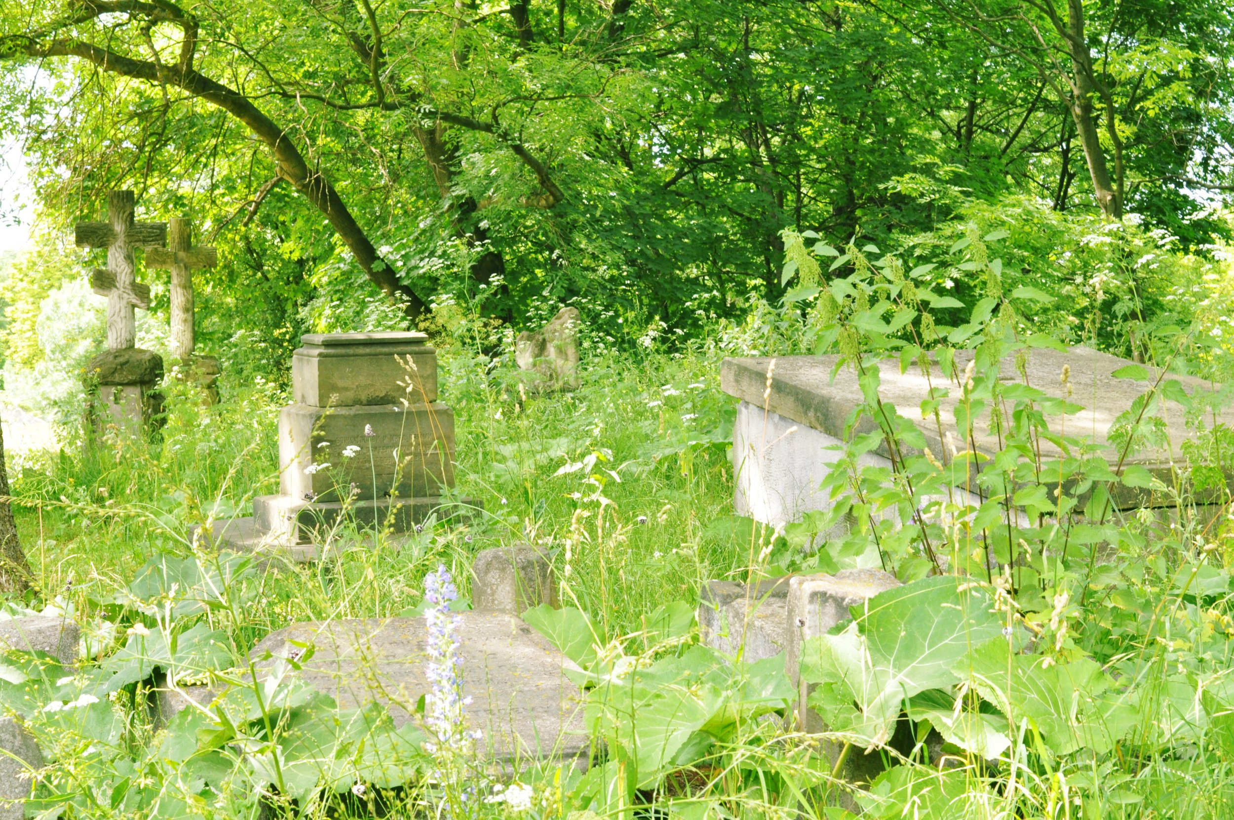 Overgrown cemetery in Cathedral Complex in Chelm, Poland