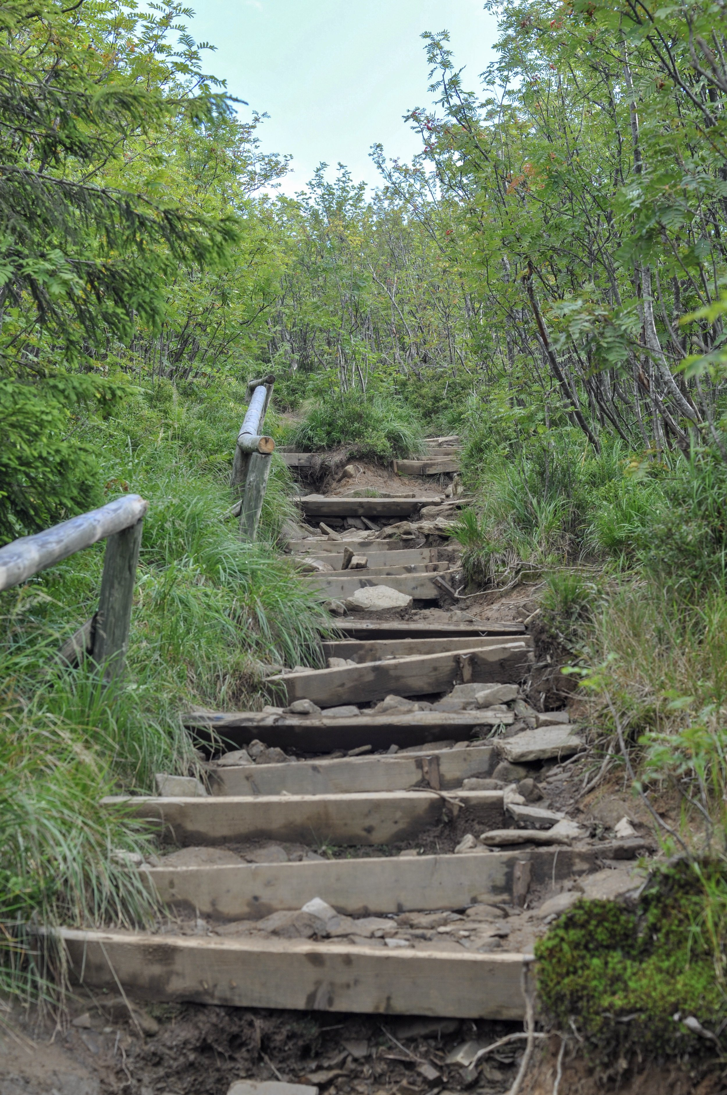 Steps on the Tri-Border trail in the Bieszcady Mountains