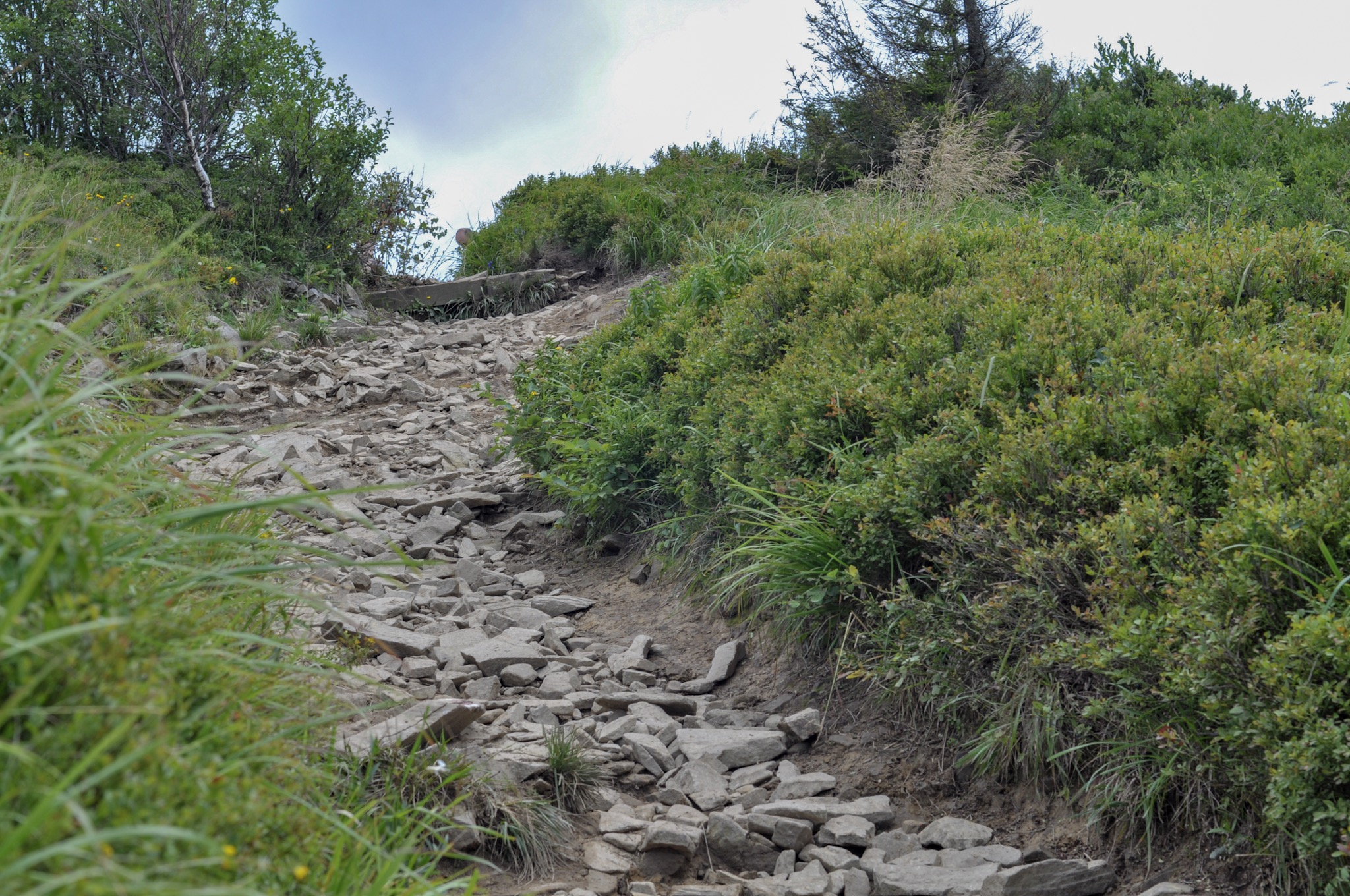 Rocky ascent on the red trail in the Biezczady Mountains