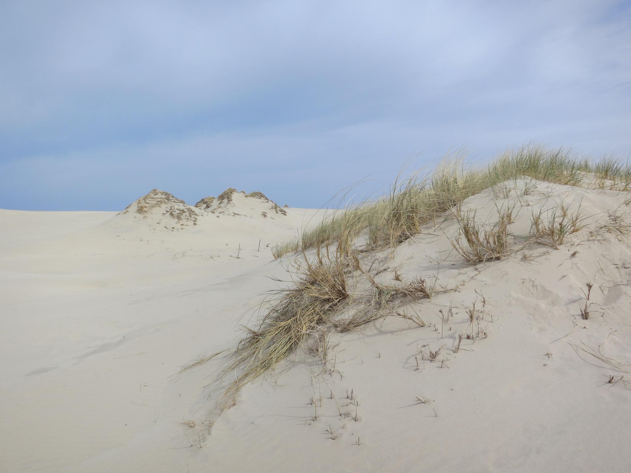 Łackca Sand Dune In Słowiński National Park