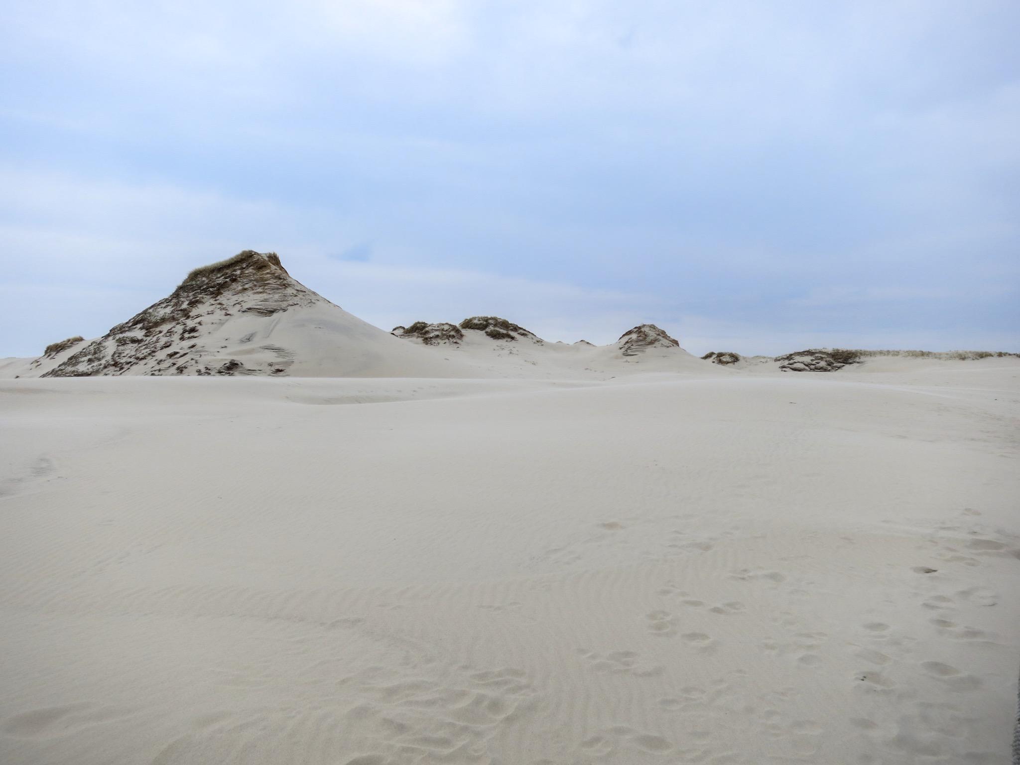 Hills on the Łackca Sand Dune In Słowiński National Park