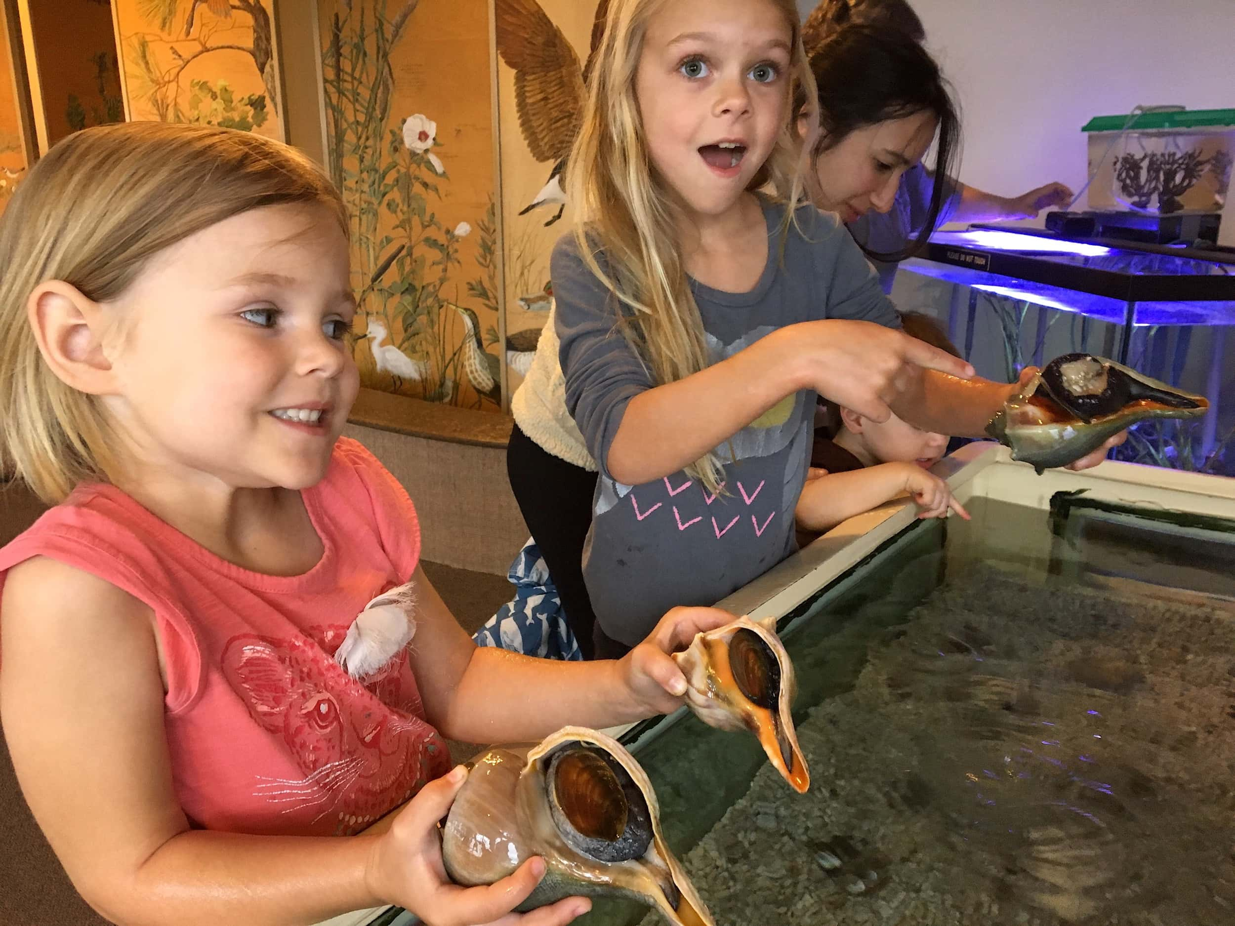 Touch tank delight at the Tom's Cove Visitor Center on Assateague. (Photo by  A Manner of Traveling )