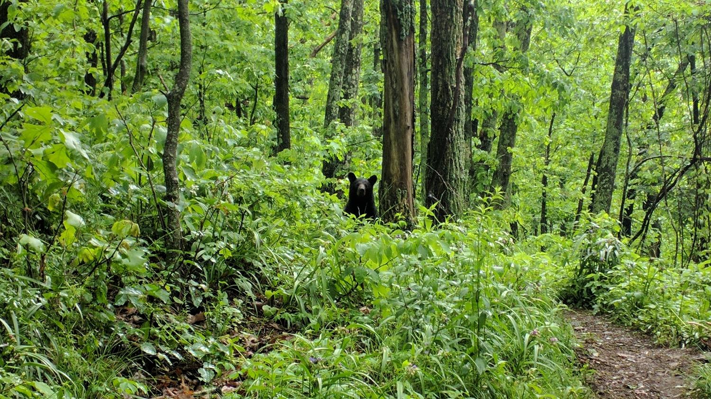 Bears Seen: 3  Tomahawks Needed: 0