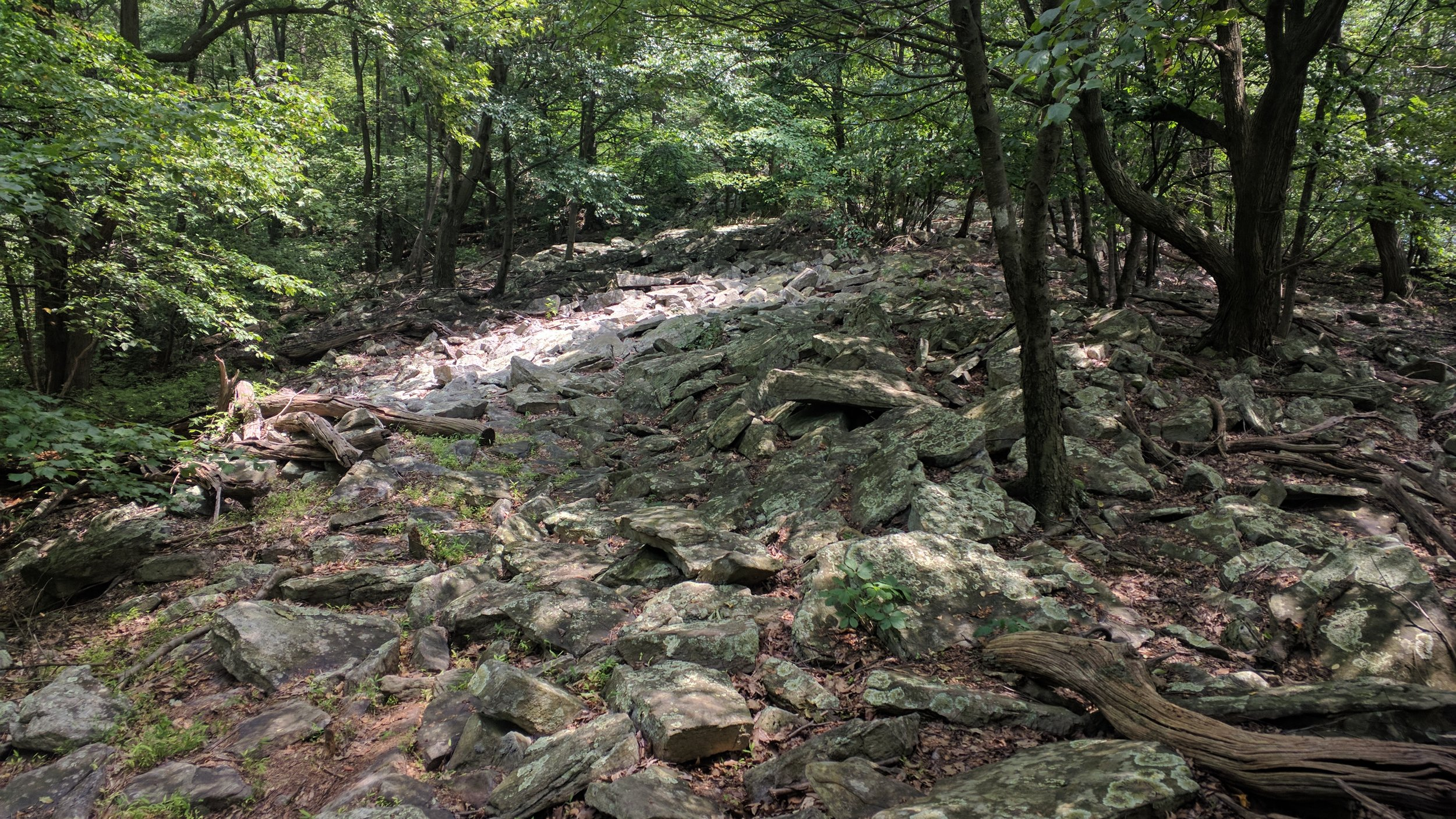 """This is field of rocks is literally the """"trail""""."""