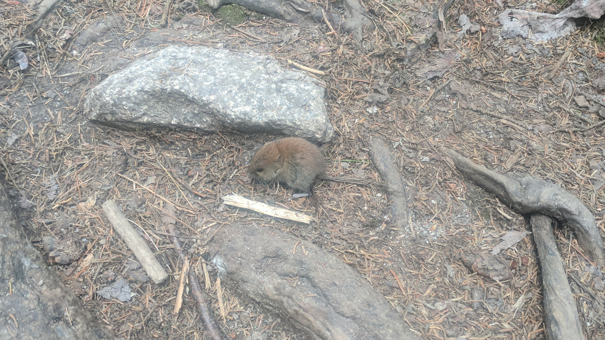 This mouse was so excited by what it was eating it didn't care I was there. I wonder if there is something succulent enough to make me ignore something a thousand times bigger standing over me within squashing distance.