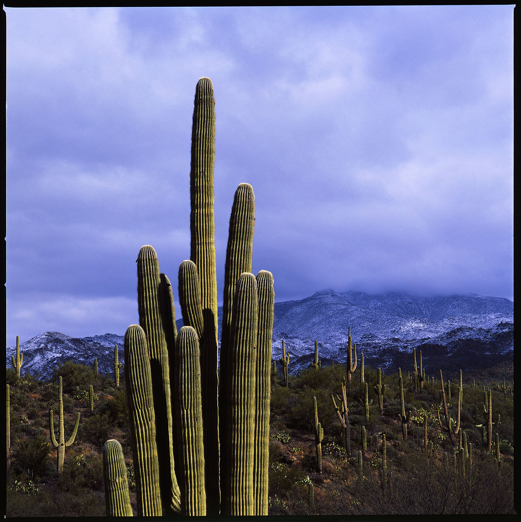 Saguaro and Snowy Superstition Mountains