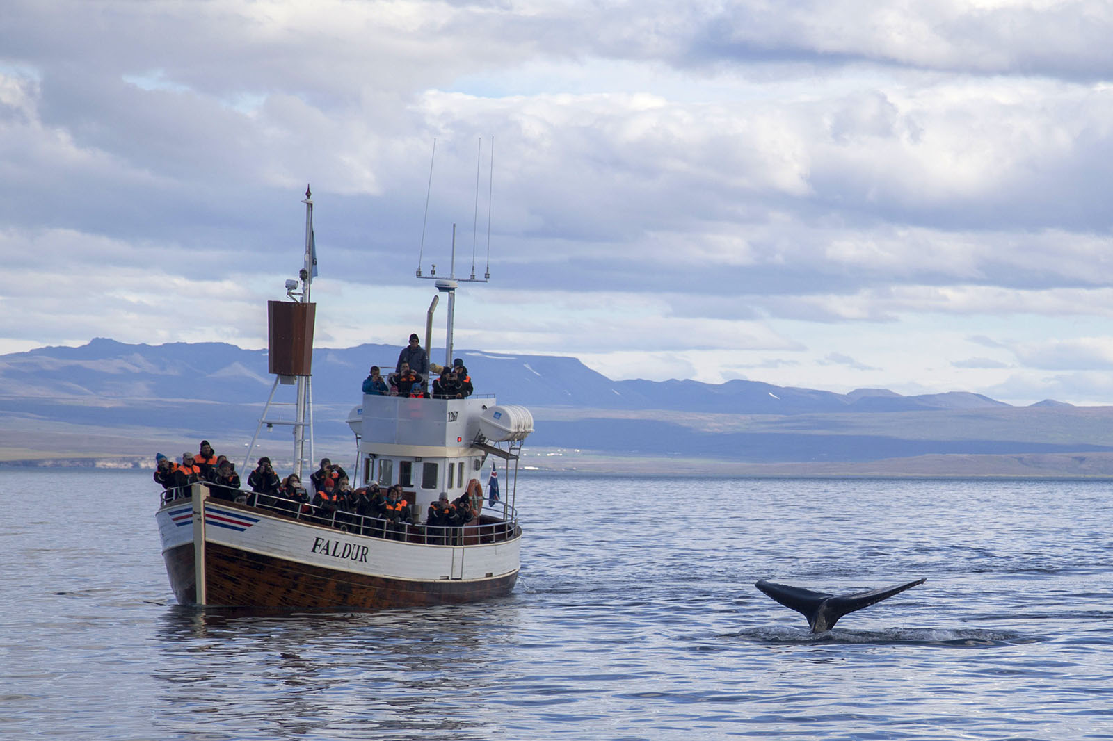 Tourists take in the view of humpback whales during a whale watching tour that embarked from Húsavík, Iceland.