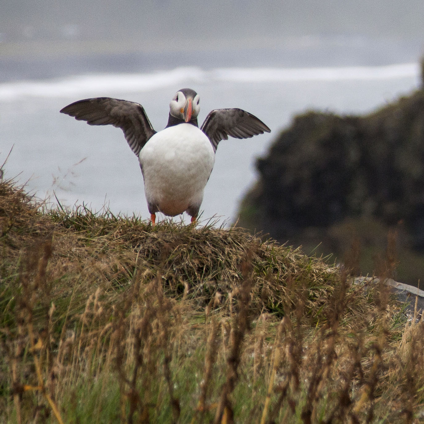 Puffins spend the fall and winter out in the open ocean living on fish.