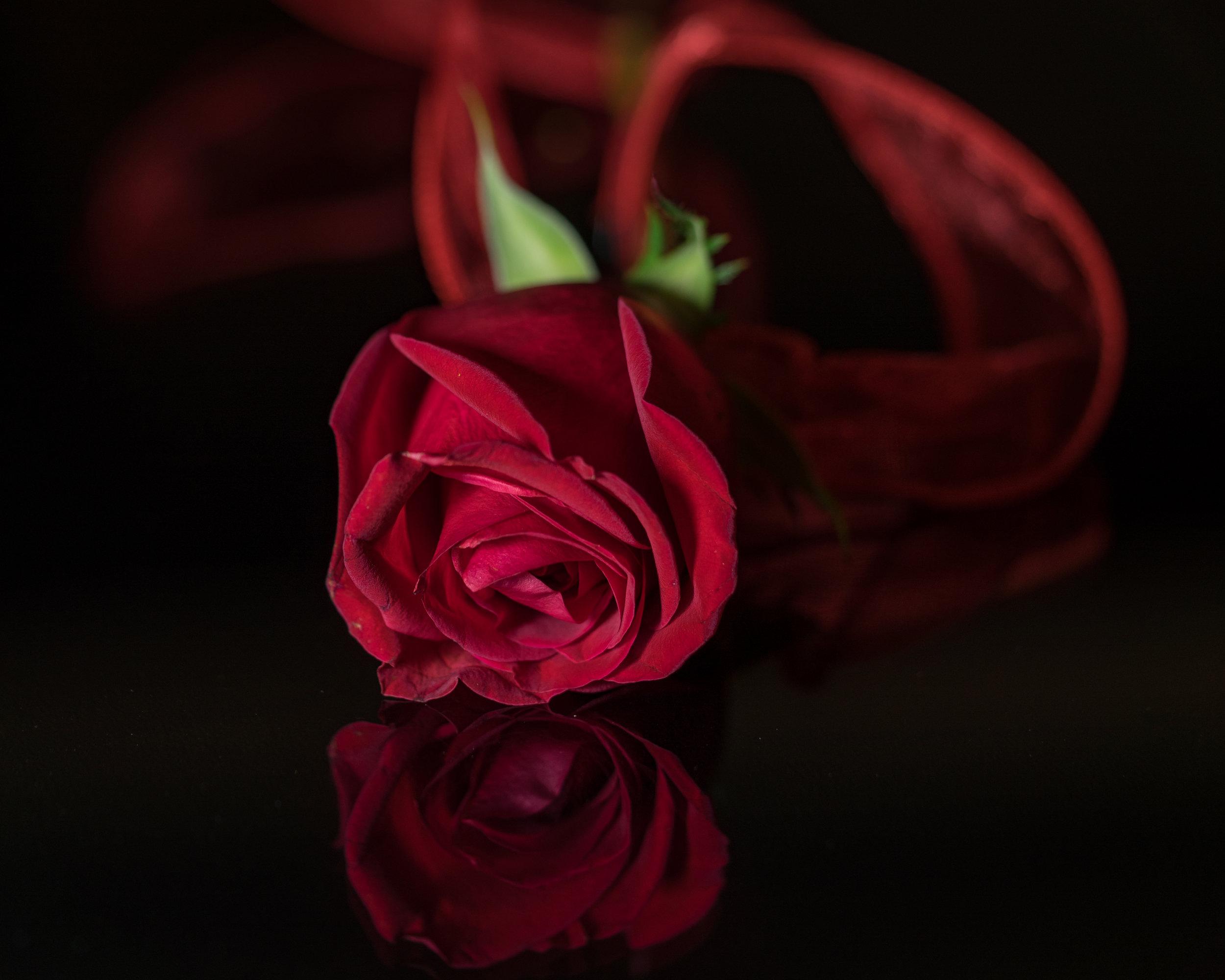 Flowers_Rose_2017_02_16-3-2 copy.jpg