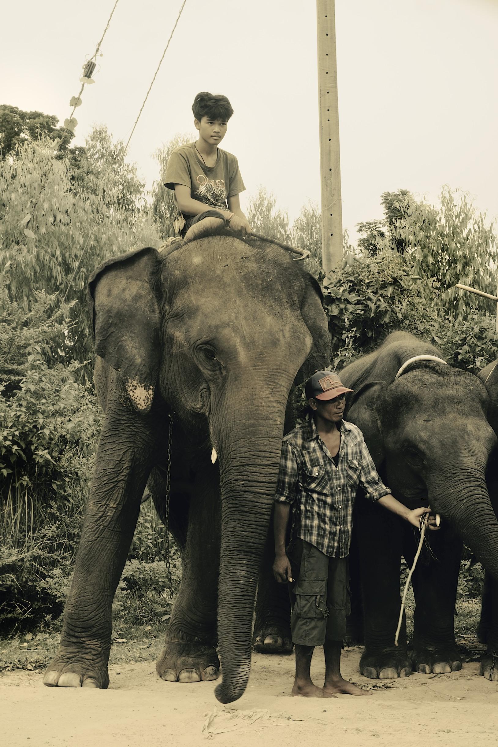 Surin, Thailand