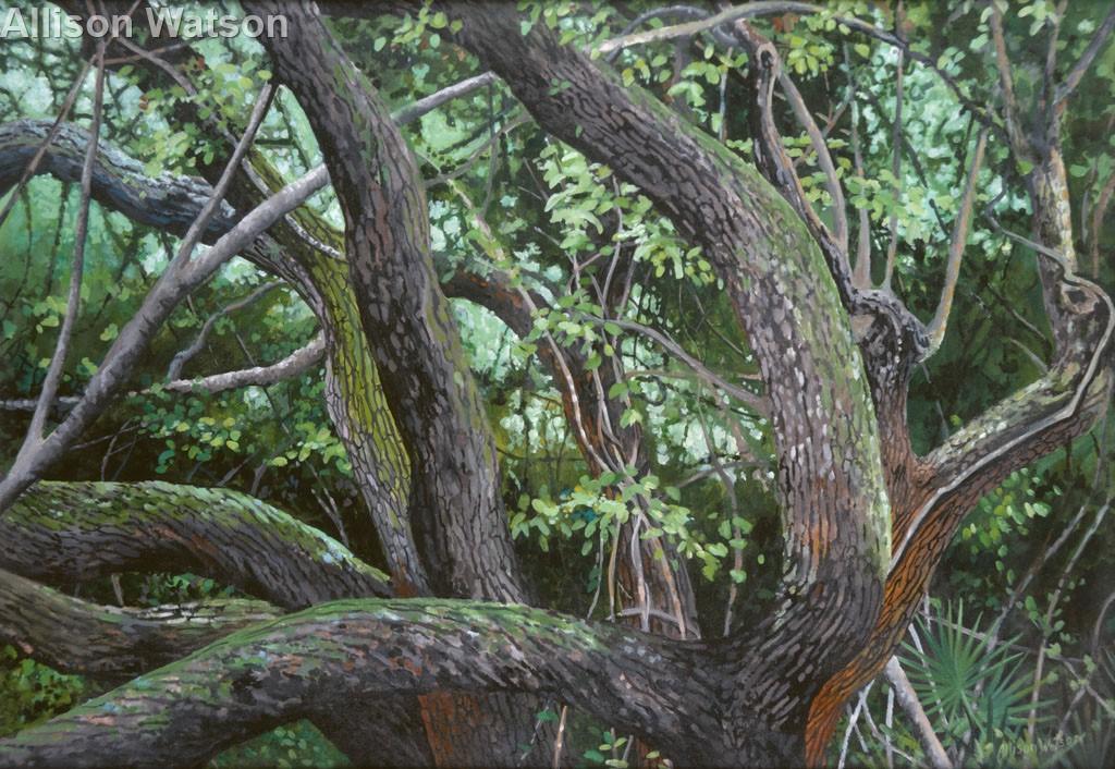 Mystery Oak #2