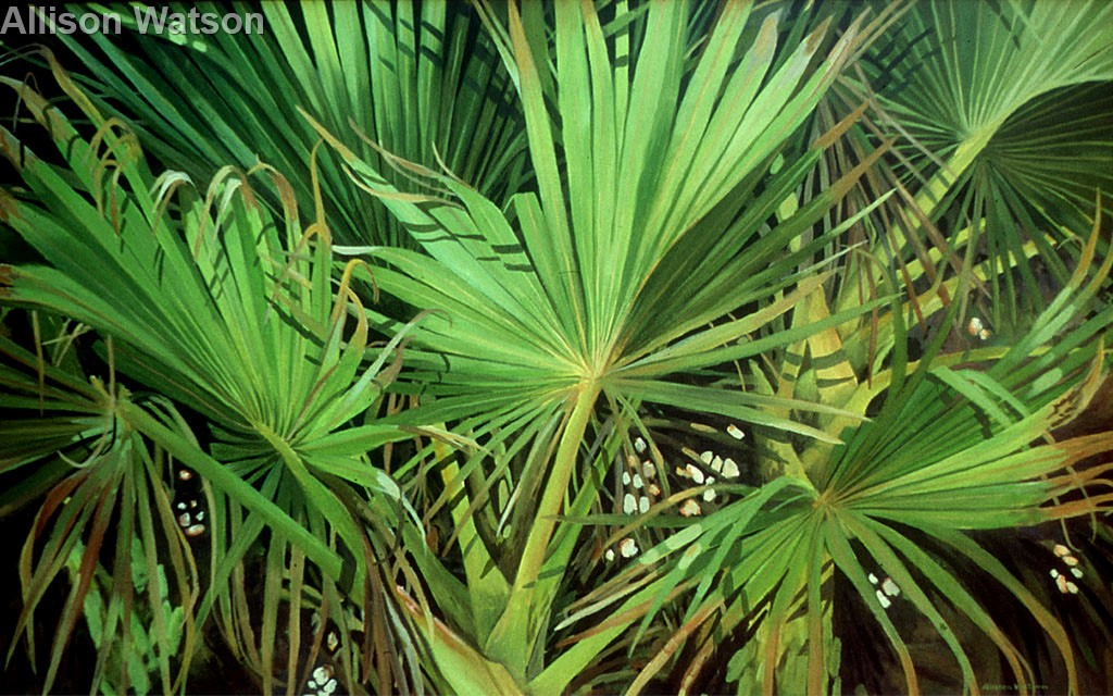 Florida Silver Palm