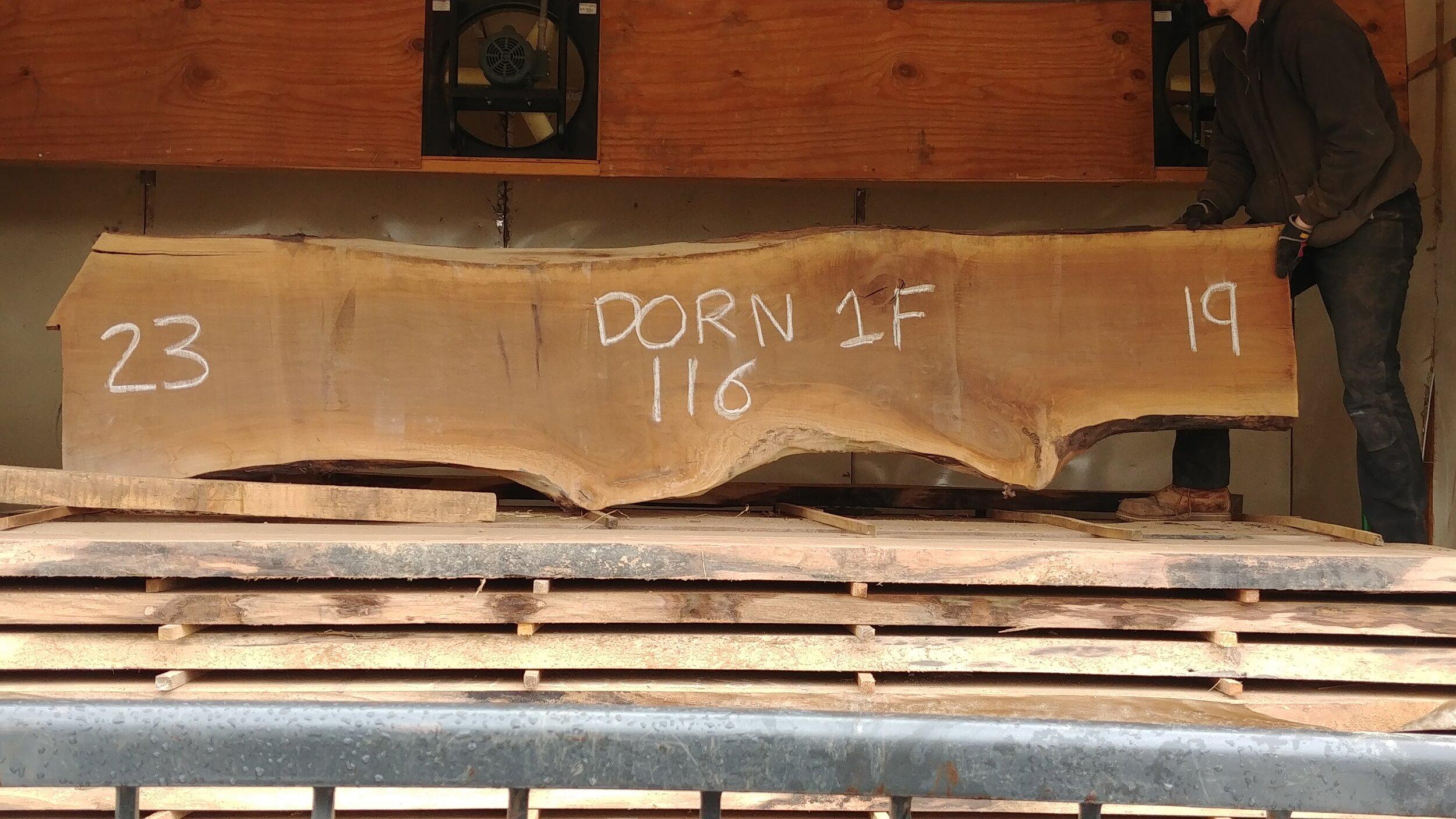 Dorn 1F.jpg